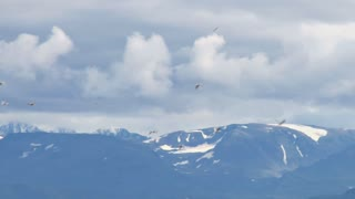 Gulls Flying By Beautiful Mountain Range