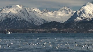 Gulls In Water Off Snowcapped Mountain Coast