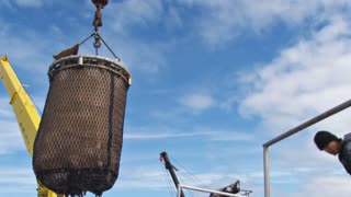 Halibut Bucket And Crane