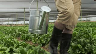 Happy farmer walking with watering can in hand on his lettuce farm .