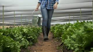 happy farmer woman walking with watering can on her lettuce farm.