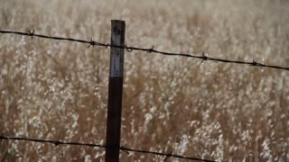 Hardware Fence With Golden Grasses Rack Focus