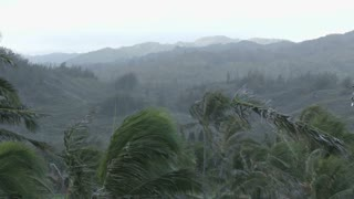 Hawaiian Palm Trees in the Wind 2