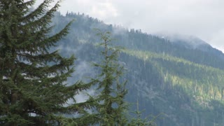 Hazy Forest Treetops On Mountain
