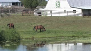 HD Farms & Countryside Farm Horses 2