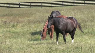 HD Farms & Countryside Farm Horses 3