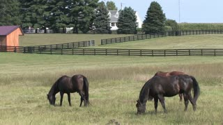 HD Farms & Countryside Farm Horses 4