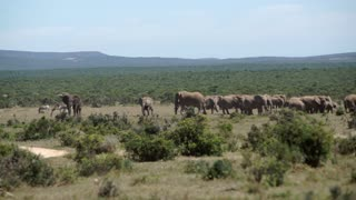 Herd of elephants in Addo Elephant National Park South Africa