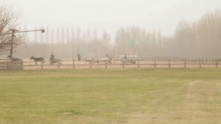 Herding Horses In Romania