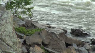 Heron Takes Flight Over River Rapids