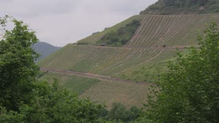 Hillside Vineyards in German Countryside