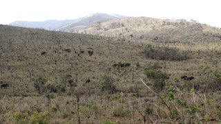 Hluhluwe imfolozi park landscape with a herd of elephants in South Africa