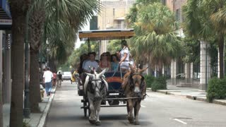 Horse Carriage Ride Through Charleston