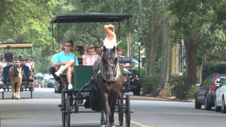 Horse Carriage Rides Close Up