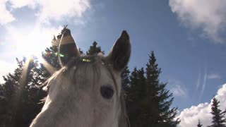 Horse Sniffing the Camera