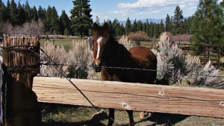 Horse Standing in Mountain Corral