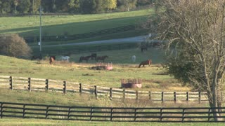Horses In A Country Field
