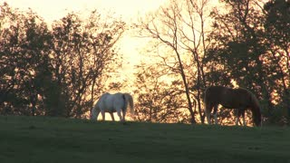 Horses In Field At Sunset