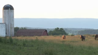 Horses in Front of Old Barn 2