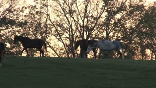 Horses On A Hill At Sunset