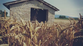 House on a wheat field