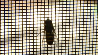 Hoverfly on Screen