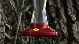 Hummingbird at Bird Feeder 5