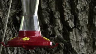 Hummingbird at Bird Feeder 7