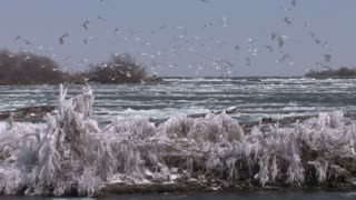 Icy Niagara and Birds