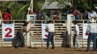 Intense Bucking Bull Throws Rider