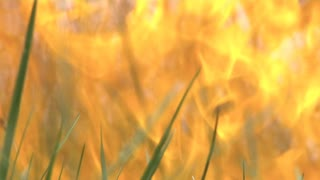 intense fire burning in tall grass, Civil War era, close up