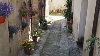 Italian alley with potted plants