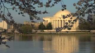 Jefferson Memorial Through Cherry Blossoms Across Tidal Basin
