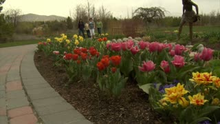 Jib Up Past Tulips To Ladies In Park