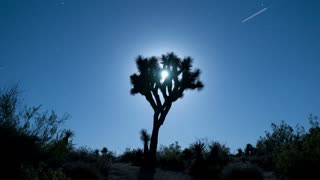 Joshua Tree Moon Rising Timelapse
