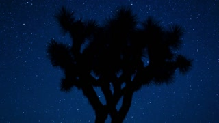 Joshua Tree Night Sky Silhouette
