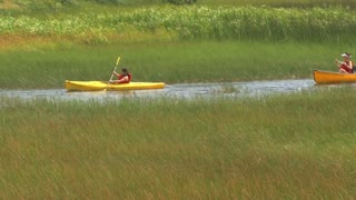 Kayaks In Canadian Marsh
