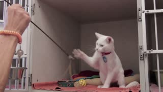 Kitten Playing With String