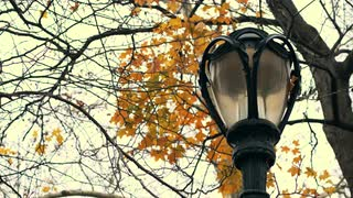 Lamp Post and Leaves in New York