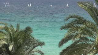 Large Group of Sailboats and Palm Trees 2