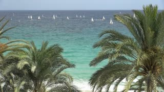 Large Group of Sailboats and Palm Trees
