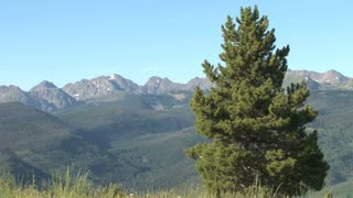 Large Pine Tree With Mountains In Background