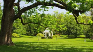 Large Tree And Gazebo