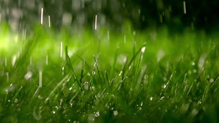 Lawn and falling raindrops at night, shallow DOF. Super slow motion clip, 500 fps