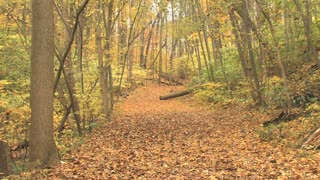 Leaf Covered Trail in Autumn 2