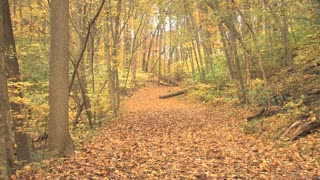 Leaf Covered Trail in Autumn Zoom Out