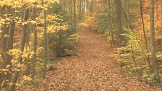 Leaf Covered Trail in Autumn
