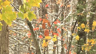 Leaves Autumn Winter