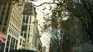 Leaves Blowing in Wind on New York Street
