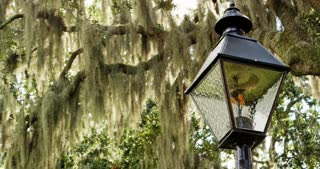 Light Post and Spanish Moss